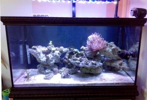 Морской аквариум: 250 литров САМП 100 литров. Самодельное диодное освещение. - Prime.jpg