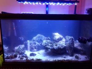 Морской аквариум: 250 литров САМП 100 литров. Самодельное диодное освещение. - razobral dekoracii.jpg