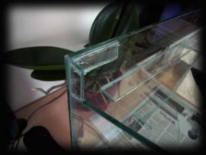 Создание пресноводного аквариума 40 литров с нуля. - общий вид просто стекло - угол.JPG
