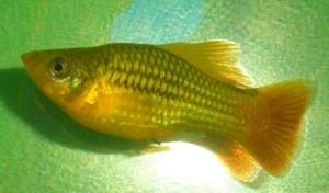 Что за рыба? - Что за рыба.JPG