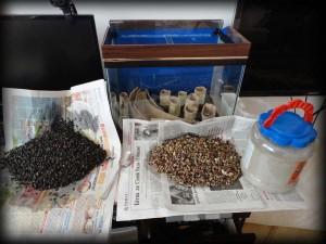 Создание пресноводного аквариума 40 литров с нуля. - грунт промыт.jpg