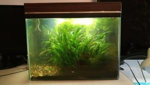 Создание пресноводного аквариума 40 литров с нуля. - 40 расформировываем.jpg
