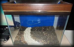 Создание пресноводного аквариума 40 литров с нуля. - достал дренажные колодцы и насыпал песок 2.jpg