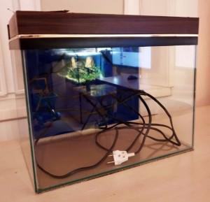 Создание пресноводного аквариума 40 литров с нуля. - 10.jpg