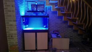 Морской аквариум: 250 литров САМП 100 литров. Самодельное диодное освещение. - 1550243557712723944671.jpg