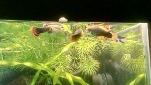 Странное поведение рыбок. - IMG_20190509_214722.jpg