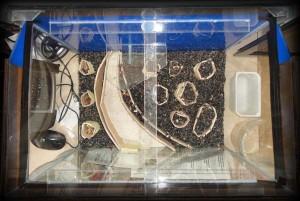 Создание пресноводного аквариума 40 литров с нуля. - засыпан остальной грунт.jpg