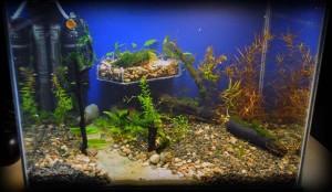 Создание пресноводного аквариума 40 литров с нуля. - запустил 2.jpg