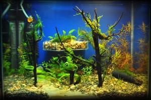 Создание пресноводного аквариума 40 литров с нуля. - итог.jpg
