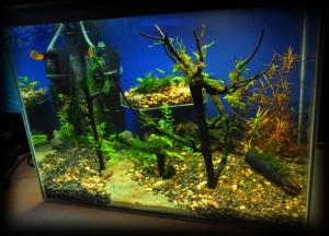 Создание пресноводного аквариума 40 литров с нуля. - итого 2.jpg