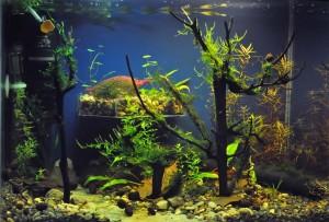 Создание пресноводного аквариума 40 литров с нуля. - овдз.jpg