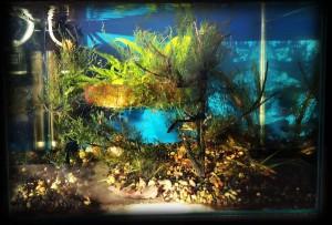 Создание пресноводного аквариума 40 литров с нуля. - june2013.jpg