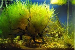 Создание пресноводного аквариума 40 литров с нуля. - на данный момент.jpg