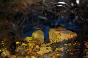 Создание пресноводного аквариума 40 литров с нуля. - расбора.jpg