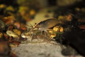 Создание пресноводного аквариума 40 литров с нуля. - фильтратор.jpg