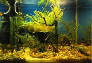 Создание пресноводного аквариума 40 литров с нуля. - bilo.jpg