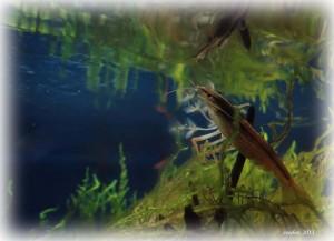 Создание пресноводного аквариума 40 литров с нуля. - filtrator.jpg
