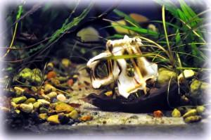 Создание пресноводного аквариума 40 литров с нуля. - 11.05.2014.jpg