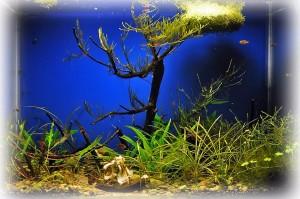 Создание пресноводного аквариума 40 литров с нуля. - 11,05,2014.jpg