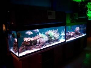 Сказ о том, как я не узнал истории аквариумистики посещение музея Живые акулы и как я почувствовал дух места. - 2.jpg