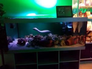 Сказ о том, как я не узнал истории аквариумистики посещение музея Живые акулы и как я почувствовал дух места. - 4.jpg