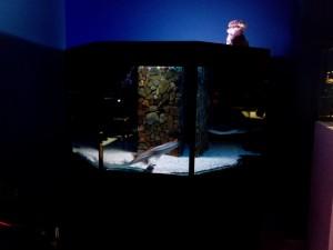 Сказ о том, как я не узнал истории аквариумистики посещение музея Живые акулы и как я почувствовал дух места. - 6.jpg