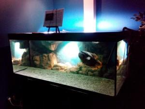 Сказ о том, как я не узнал истории аквариумистики посещение музея Живые акулы и как я почувствовал дух места. - 10.jpg