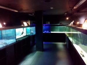 Сказ о том, как я не узнал истории аквариумистики посещение музея Живые акулы и как я почувствовал дух места. - 11.jpg