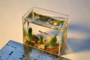 Интересно как устроена организация в таком аквариуме? - 9SoEfzNsbPE.jpg