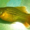 Что за рыба.JPG