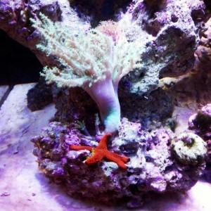 Морской аквариум. Морская звезда.