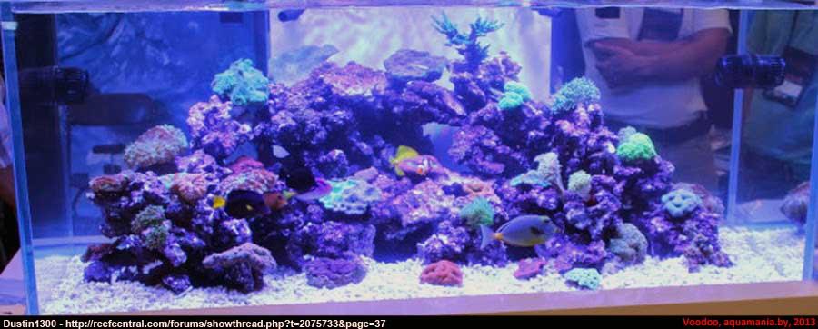 Морской-аквариум-1-1