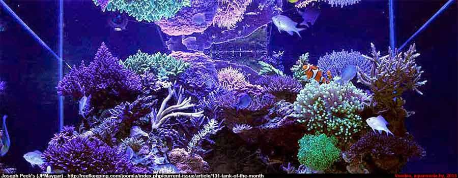 Морской-аквариум-1-2