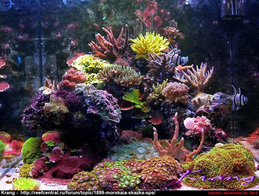 Морской-аквариум-1-3