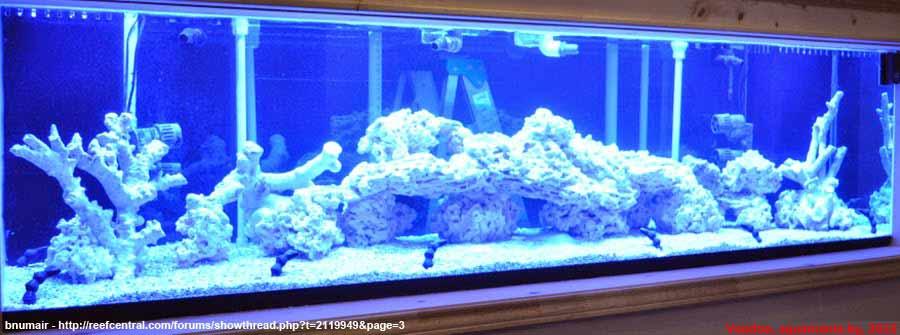 Морской-аквариум-11-1