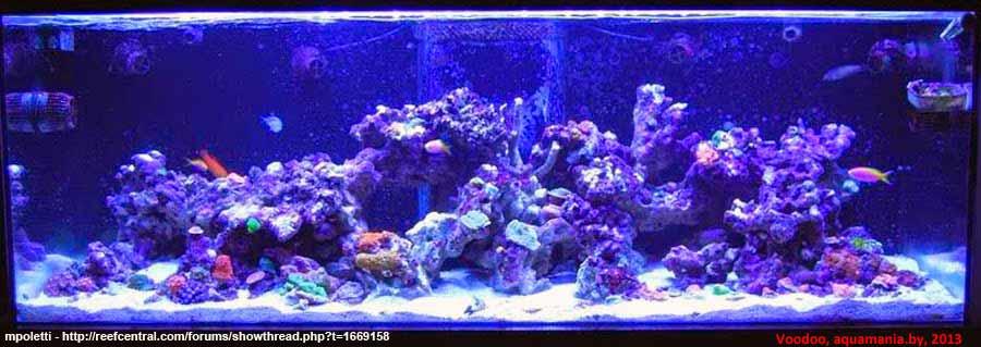 Морской-аквариум-11-2
