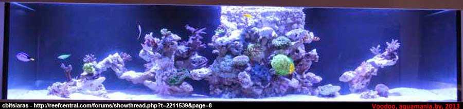Морской-аквариум-12