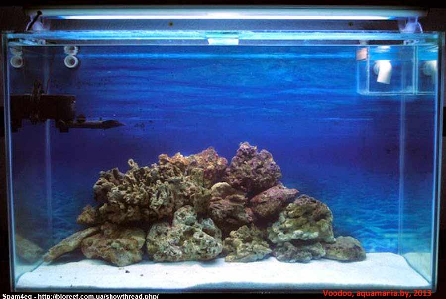 Морской-аквариум-13-1