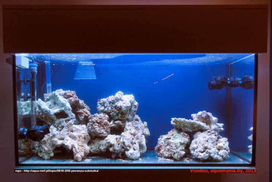Морской-аквариум-13-2