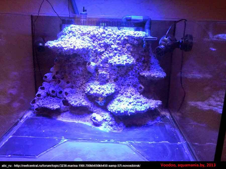 Морской-аквариум-14-4