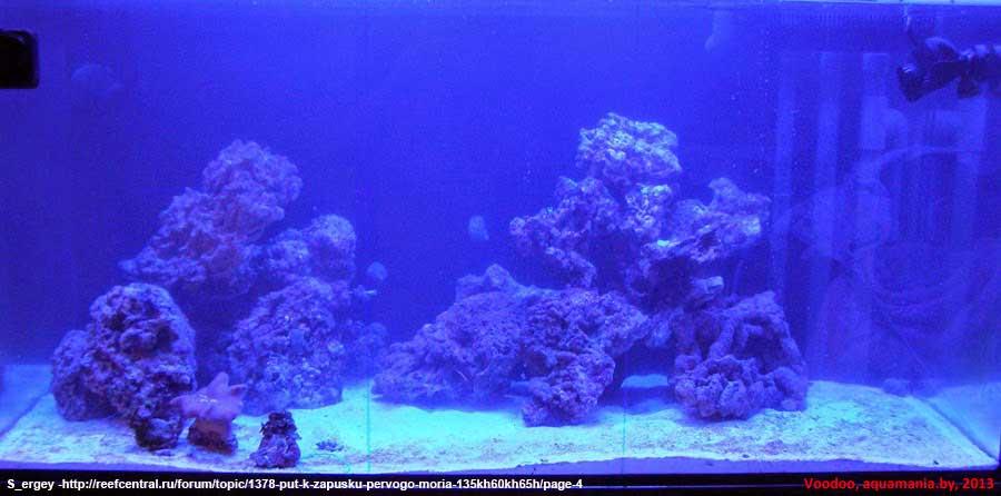 Морской-аквариум-2-1