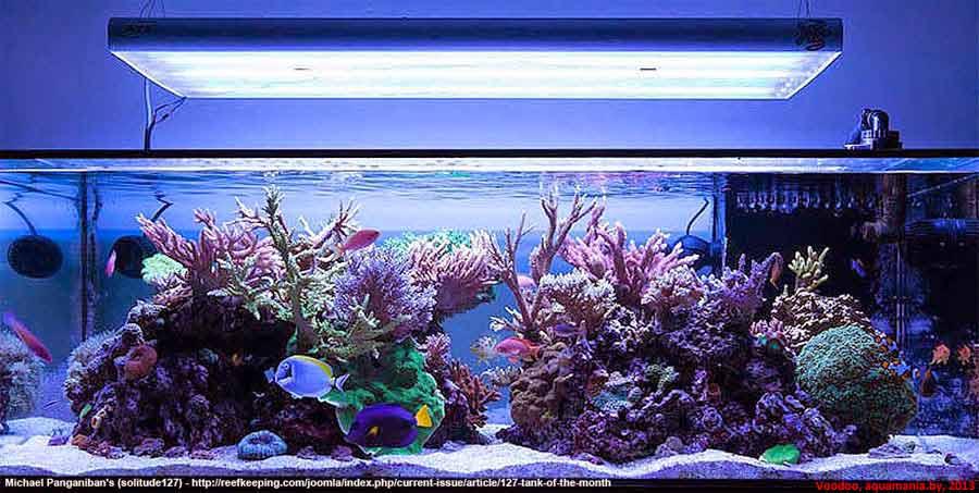 Морской-аквариум-2-2