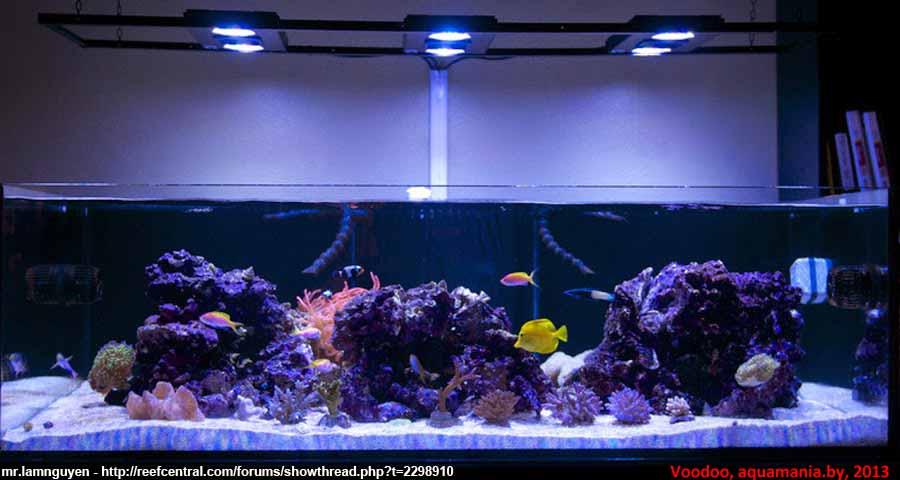 Морской-аквариум-3-2
