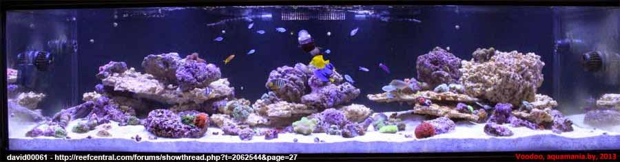 Морской-аквариум-3-3