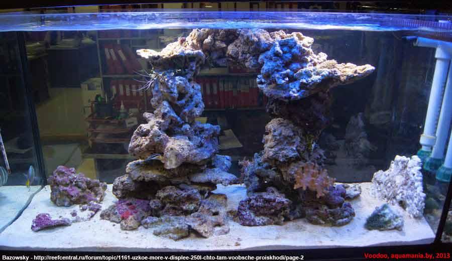 Морской-аквариум-4-1