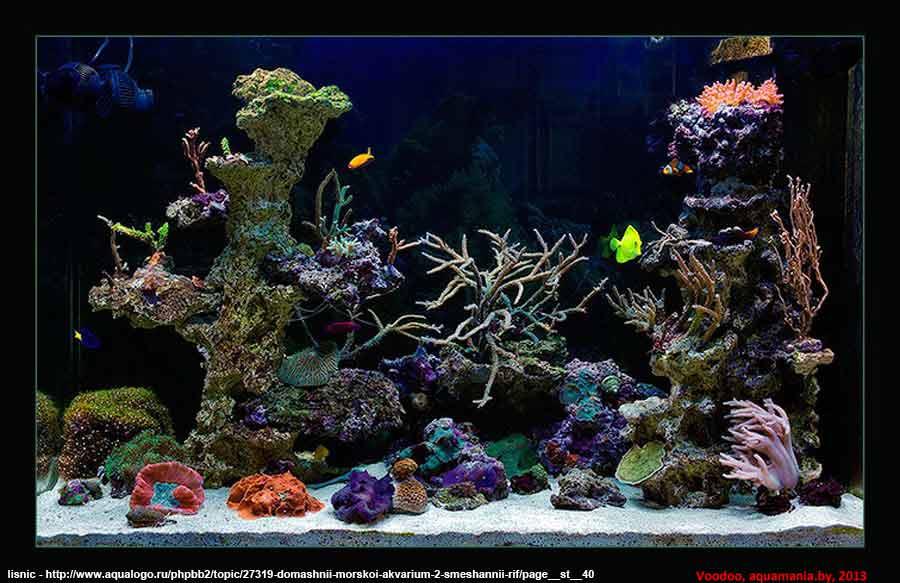 Морской-аквариум-4-2