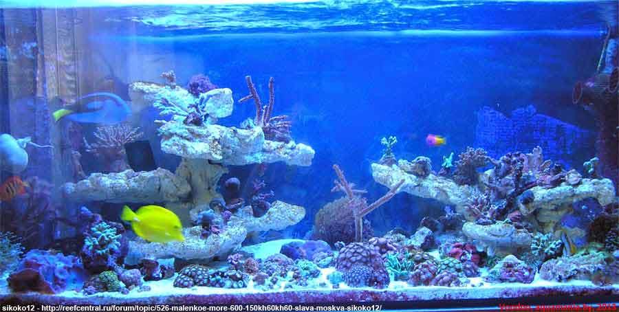 Морской-аквариум-4-3