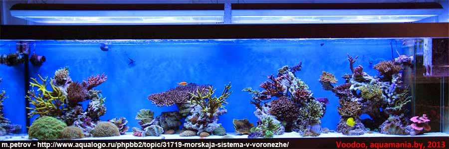 Морской-аквариум-5-1