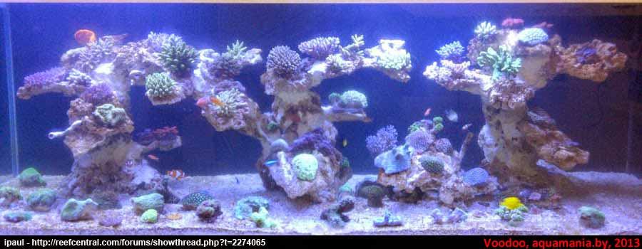 Морской-аквариум-5-2