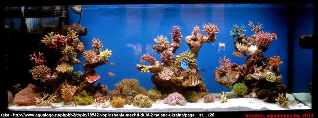 Морской-аквариум-5-3